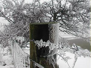 Ice coated Fence and Tree